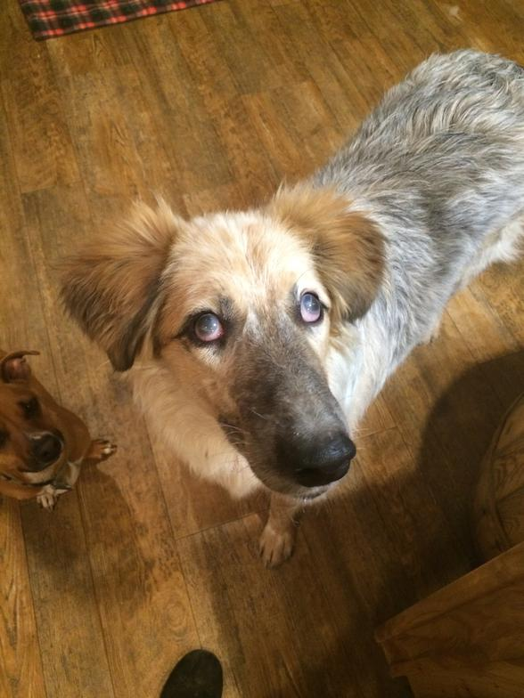 Dog Rescue Carson City Nv